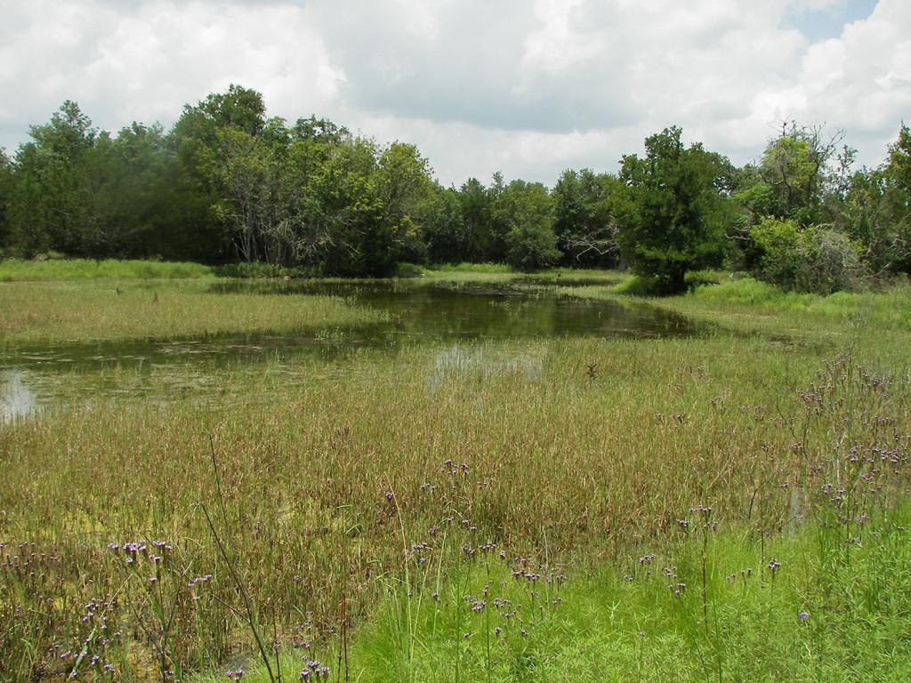 Scenic pic of wetland-WEB